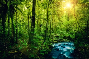 IF_Blog_Rainforest2
