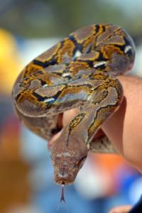 Scary Python
