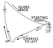 Boomerang Diagram